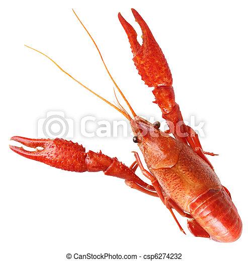 Boiled Crawfish - csp6274232