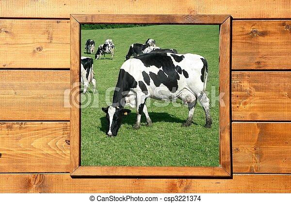 bois, fenêtre, pré, vache, vue - csp3221374