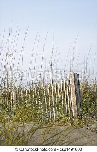 bois, plage., barrière - csp1491800