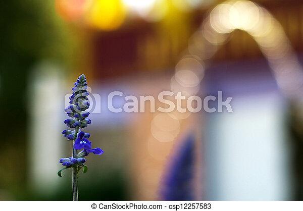 bokeh, fleur, lavande - csp12257583