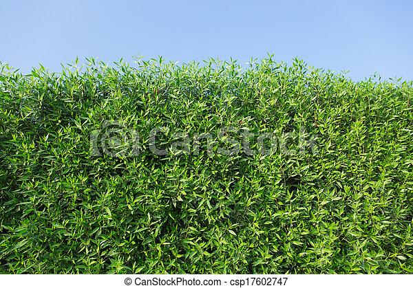 bokrok, zöld - csp17602747