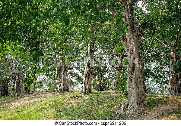 Bomen In Tuin : Bomen tuin schaduw