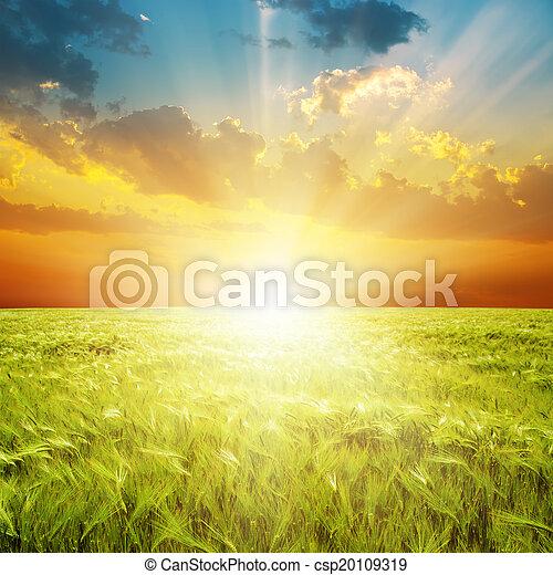 bon, sur, champ, vert, orange, coucher soleil, agriculture - csp20109319