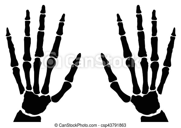 Bone Hands Isolated The Bones Of The Hand X Ray Isolated On Clip