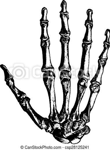 Bones of the hand, vintage engraving. - csp28125241