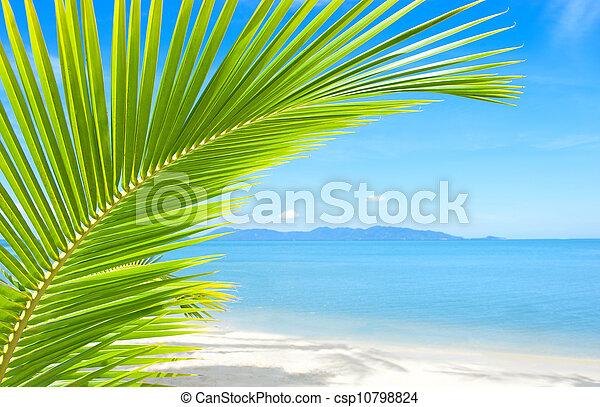 bonito, árvore, tropicais, areia, praia palma - csp10798824
