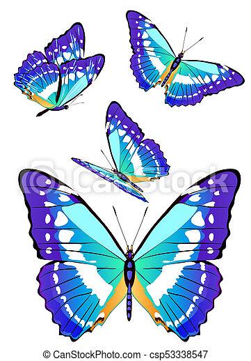 bonito, azul, branca, borboletas, isolado - csp53338547