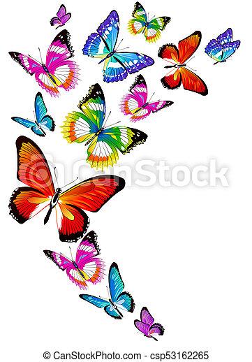 bonito, cor, branca, isolado, borboletas - csp53162265