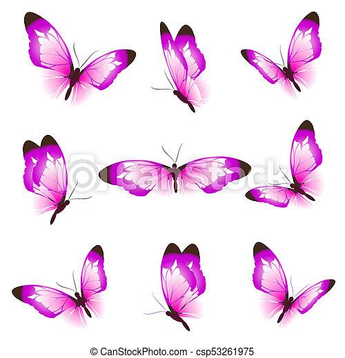 bonito, cor-de-rosa, branca, borboletas, isolado - csp53261975