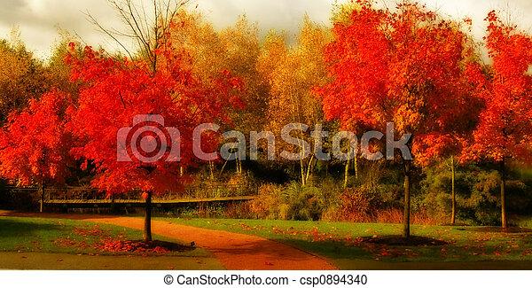 bonito, cor, outono - csp0894340