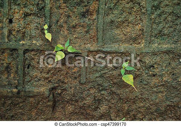 bonito, crescendo, pequeno, planta verde - csp47399170