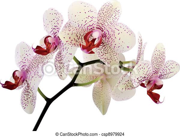 bonito, flores, orquídea - csp8979924