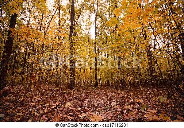 bonito, floresta outono - csp17116201