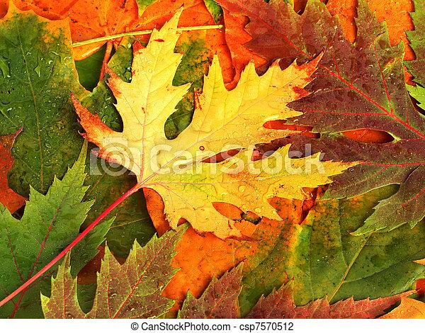 bonito, folhas, outono, desenho, caído, fundo - csp7570512