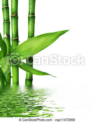 bonito, fresco, bambu - csp11472069