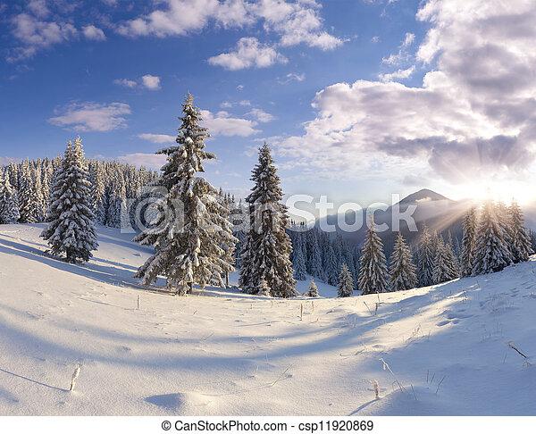 bonito, inverno, árvores., neve coberta, paisagem - csp11920869