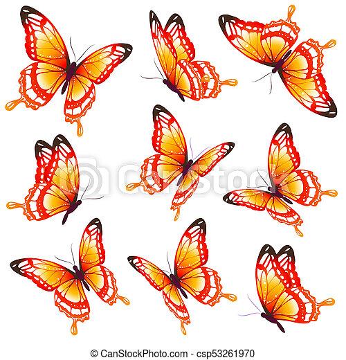 bonito, laranja, branca, borboletas, isolado - csp53261970