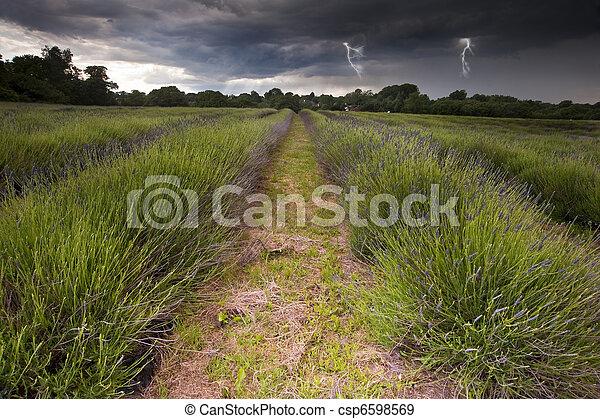 bonito, lightening, nuvens, parafusos, campo, campos, imagem, lavanda, dramático, tempestade, vibrante, sobre, paisagem, mal-humorado - csp6598569