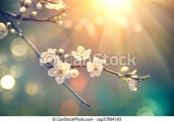 bonito, natureza, sol, florescer, árvore, cena, chama - csp37894193