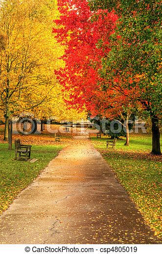 bonito, outono, outono, cena, floresta - csp4805019