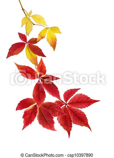 bonito, outono sai, arranjo - csp10397890