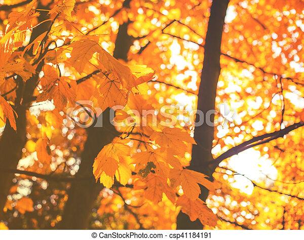 bonito, outono sai, park., coloridos - csp41184191