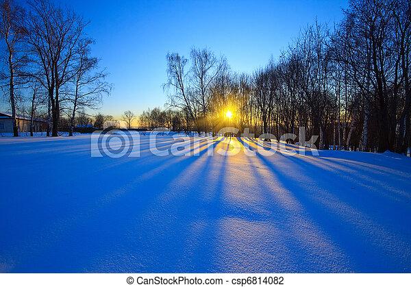 bonito, pôr do sol, floresta, inverno - csp6814082
