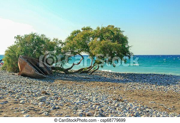 bonito, praia, árvore - csp68779699