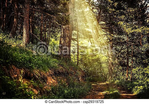 bonito, raios, magia, sol, arborize caminho - csp29319725