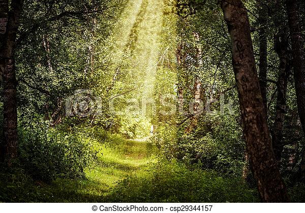 bonito, raios, ramos, sol, através, floresta, magia - csp29344157