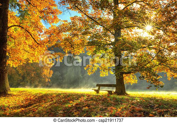 bonito, secos, folhas, árvore, outono, caído - csp21911737