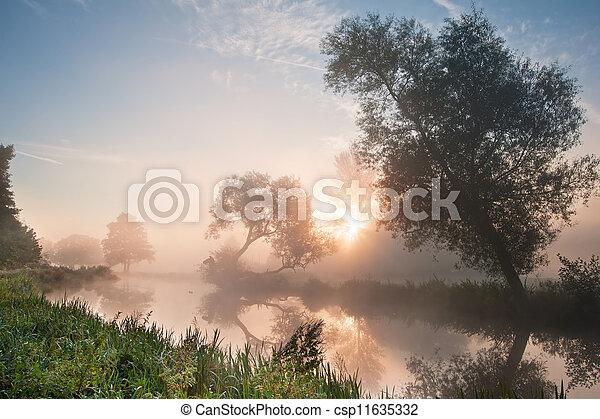 bonito, sobre, árvores, paisagem, sunb, nebuloso, rio, amanhecer - csp11635332