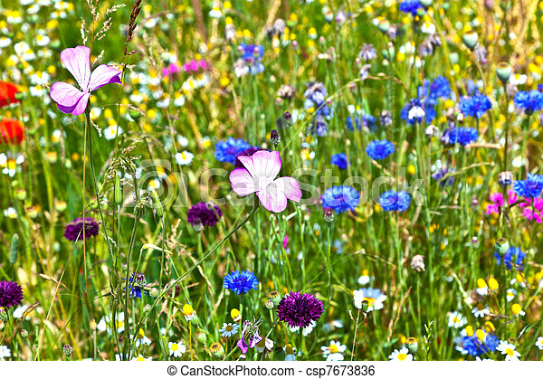 bonito, wildflowers, prado - csp7673836