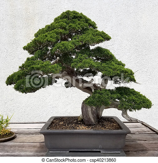 bonsai baum kiefer bonsai immergr ner baum miniatur stockbild suche fotos und foto. Black Bedroom Furniture Sets. Home Design Ideas