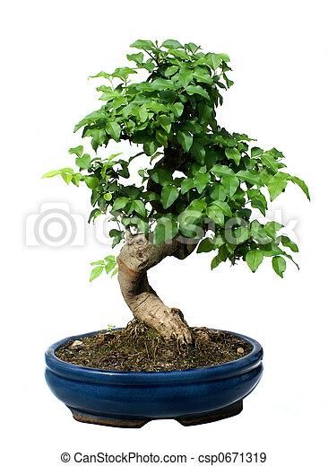 bonsai baum bonsai topf keramisch baum freigestellt wei es. Black Bedroom Furniture Sets. Home Design Ideas
