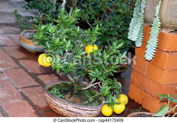 Bonsai Baum Zitrone Kunst Baume Haben Gerade Zitrone Fruits