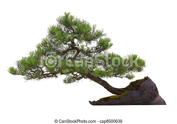 Bonsai - houseplant - csp8500639