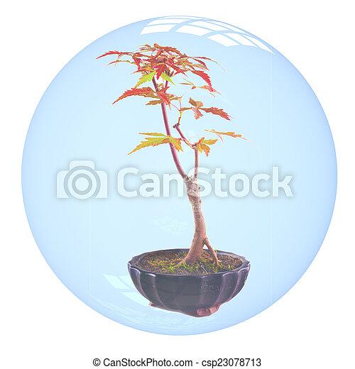 Bonsai in bubble - csp23078713