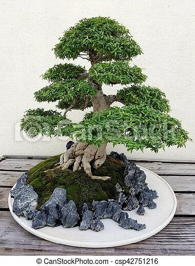 Bonsai Miniature Pine Tree