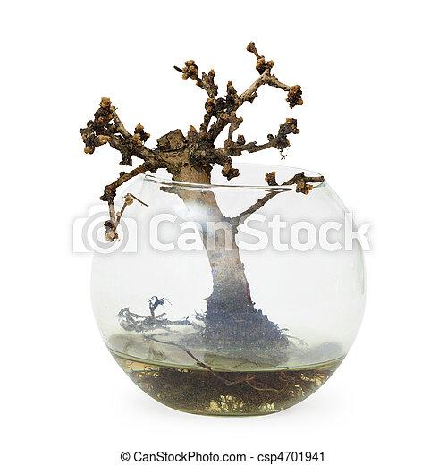 Bonsai plante arbre mort manqu aquarium petit - Bonsai arbre prix ...