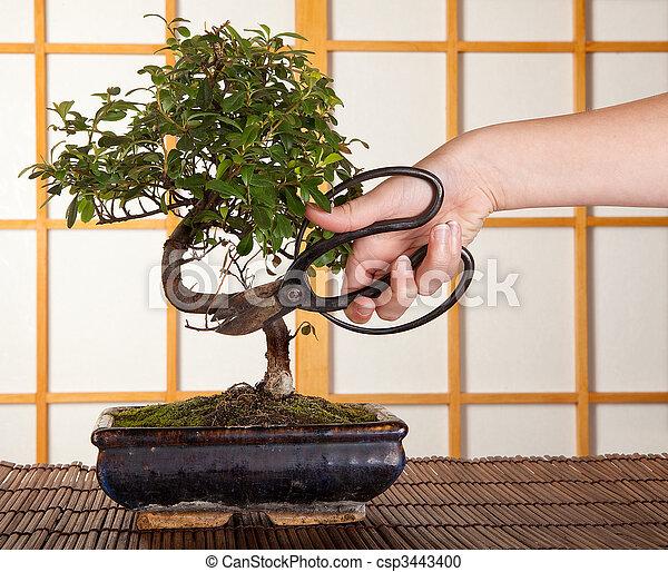bonsai schneiden bonsai baum japanisches hand fenster schneiden shoji front schieben. Black Bedroom Furniture Sets. Home Design Ideas
