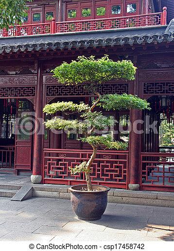 Bonsai Shanghai Garten Baum Gross Porzellan Yuyuan Bonsai