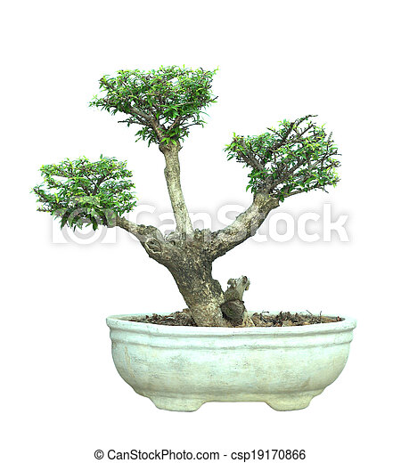 bonsai topf baum freigestellt hintergrund wei es. Black Bedroom Furniture Sets. Home Design Ideas