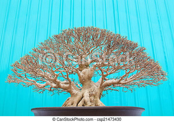 Bonsai tree - csp21473430