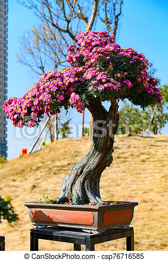 Bonsai Tree With Lilac Chrysanthemum Flowers Vertical Composition Canstock