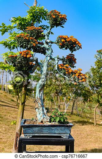 Bonsai Tree With Orange Color Chrysanthemum Flowers Canstock