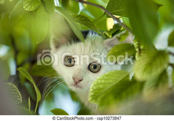 boom., jonge, kat - csp10273847