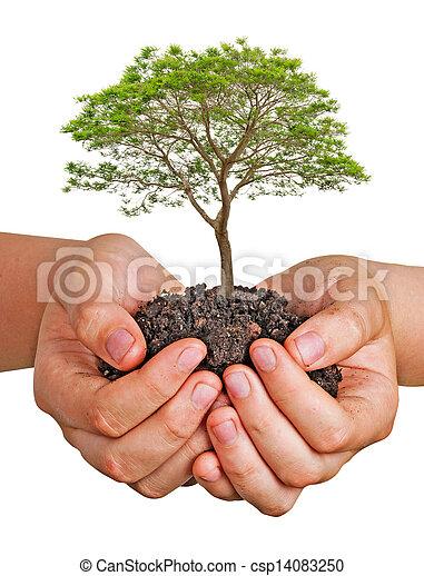 boompje, handen - csp14083250