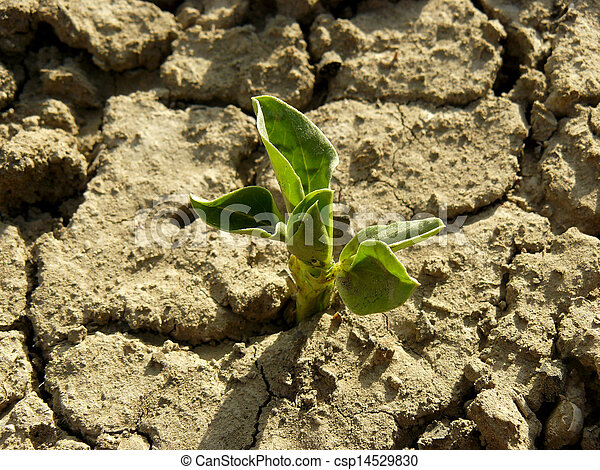 boon, kiemplant - csp14529830