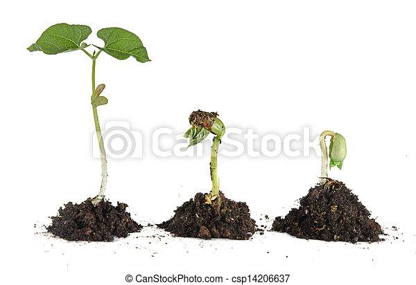 boon, seedlings - csp14206637